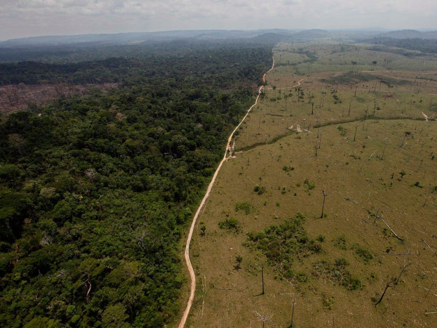 The Amazon Rainforest might turn into a Savanna