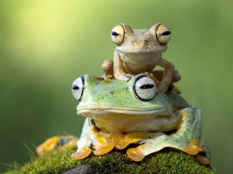 Frogs Reveal the Health of Our Planet